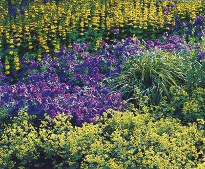 Оформление цветников на даче