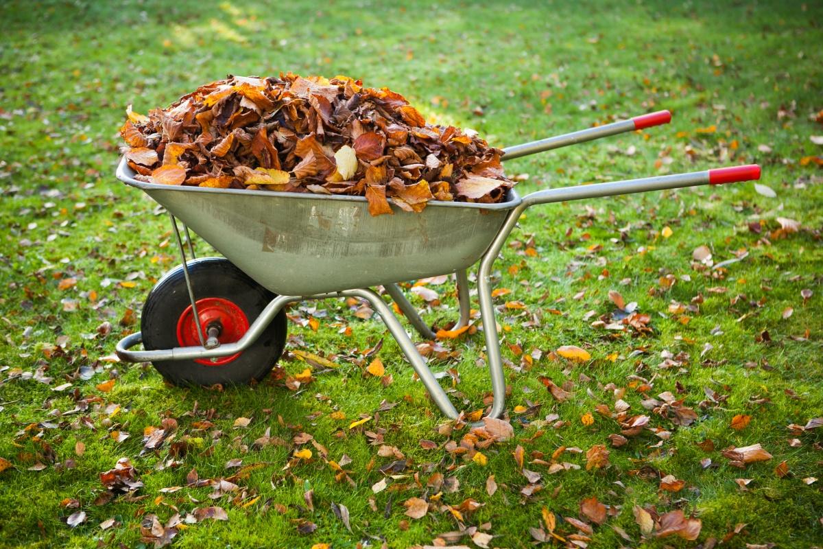 Садовая тележка со старыми листьями