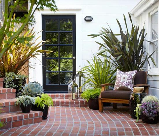 Зеленые растения - украшение любого дома