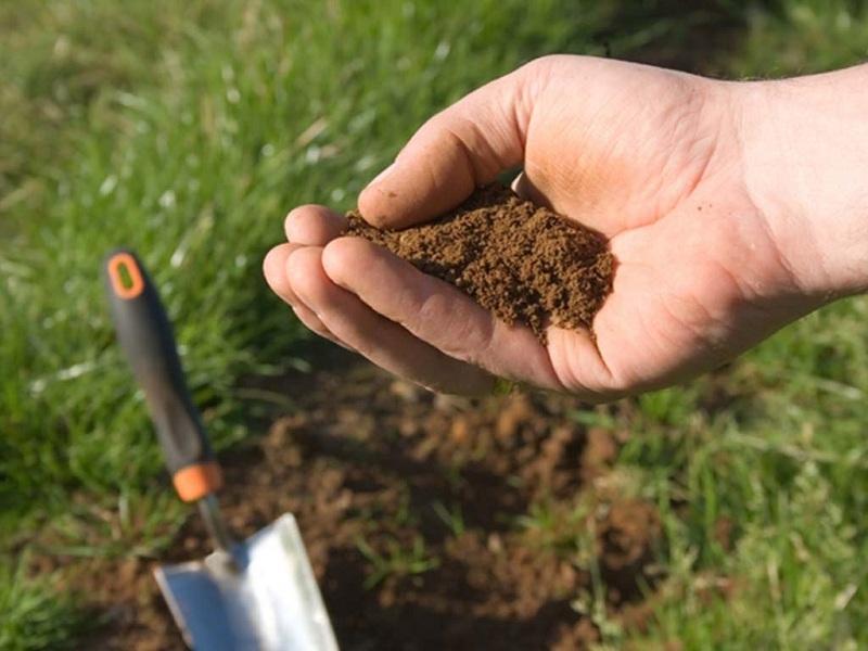Кислая почва для кислицы