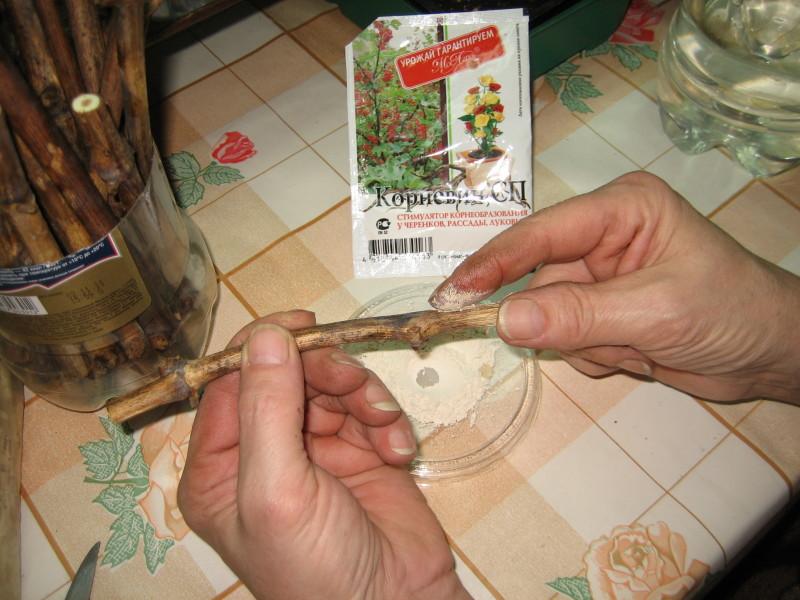 Обработка корневином корней