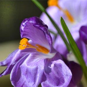 оранжевый и фиолетовый 14