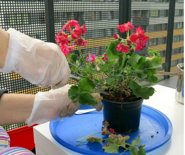 Емкость для пересадки растений