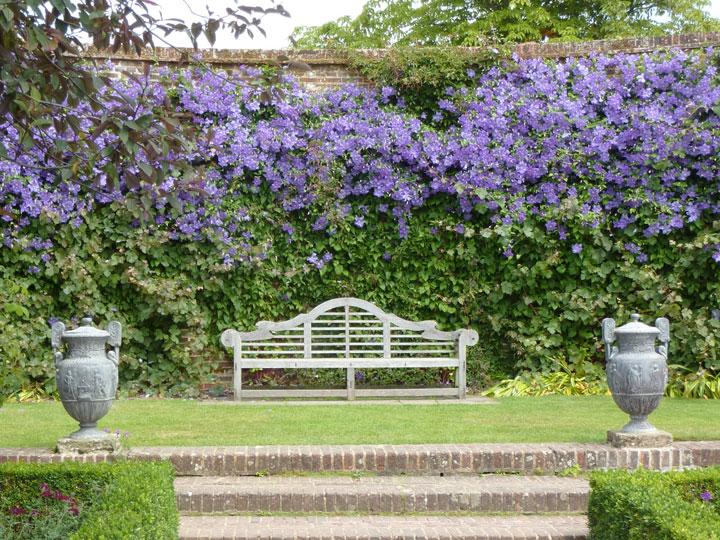 Изгородь, покрытая вьющимися стеблями и цветами