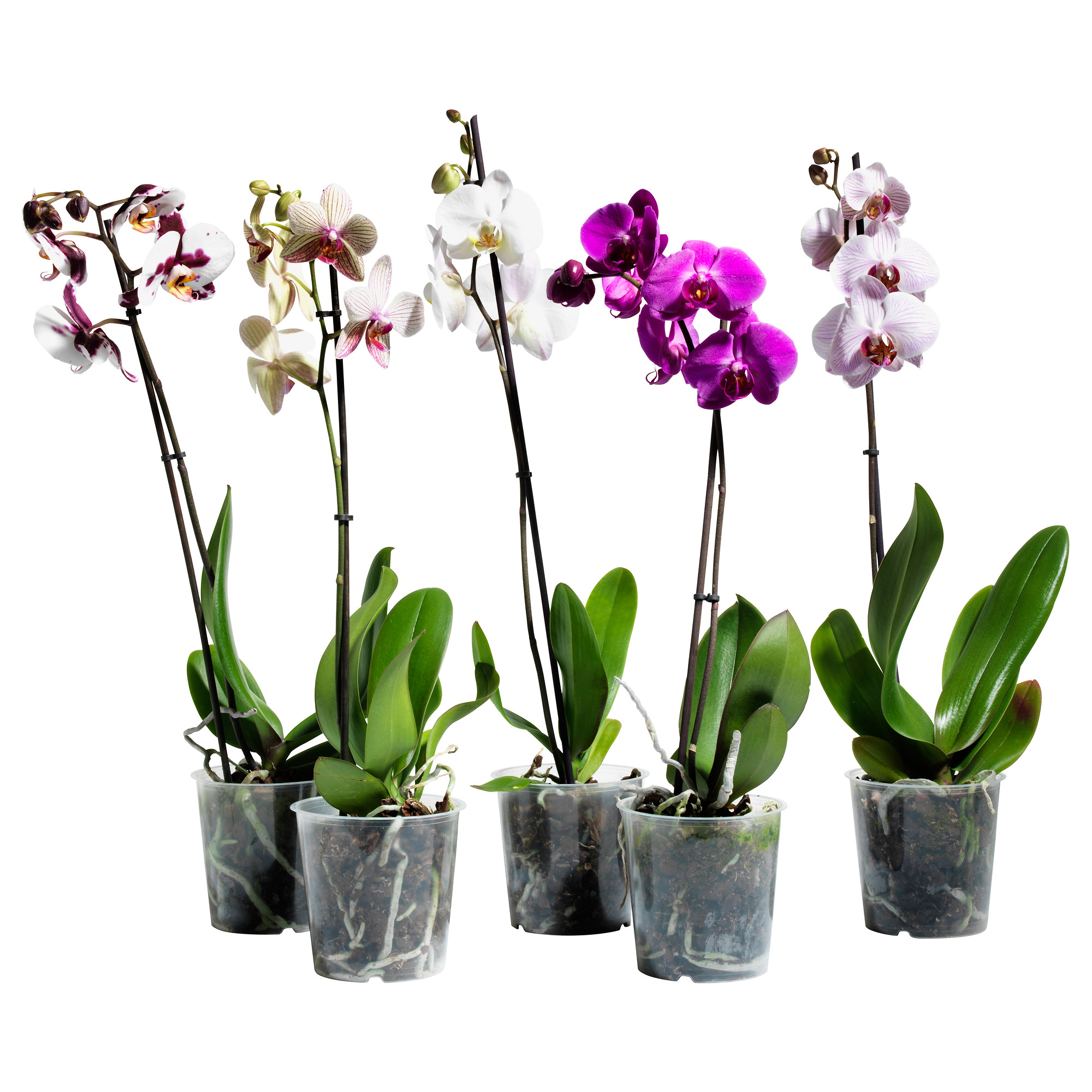 Орхидеи в пластике