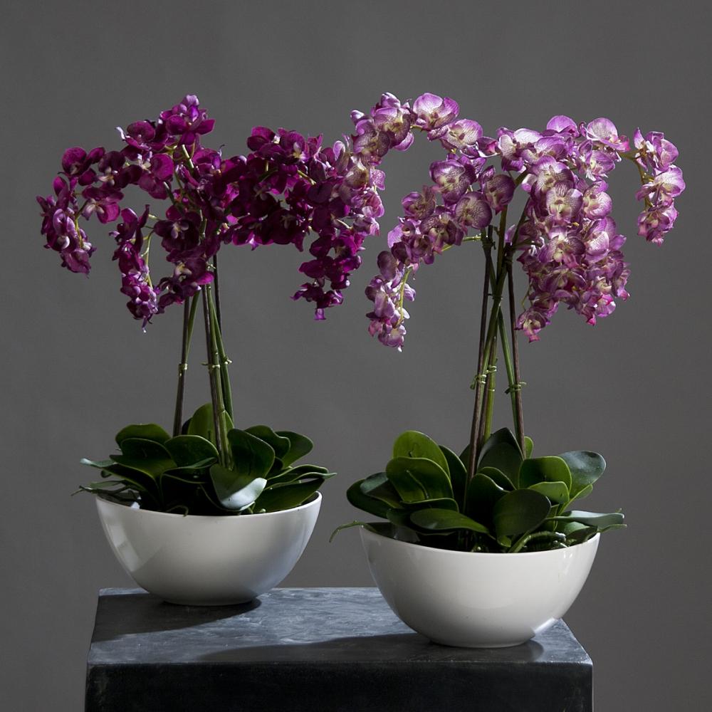 Орхидеи в корзине
