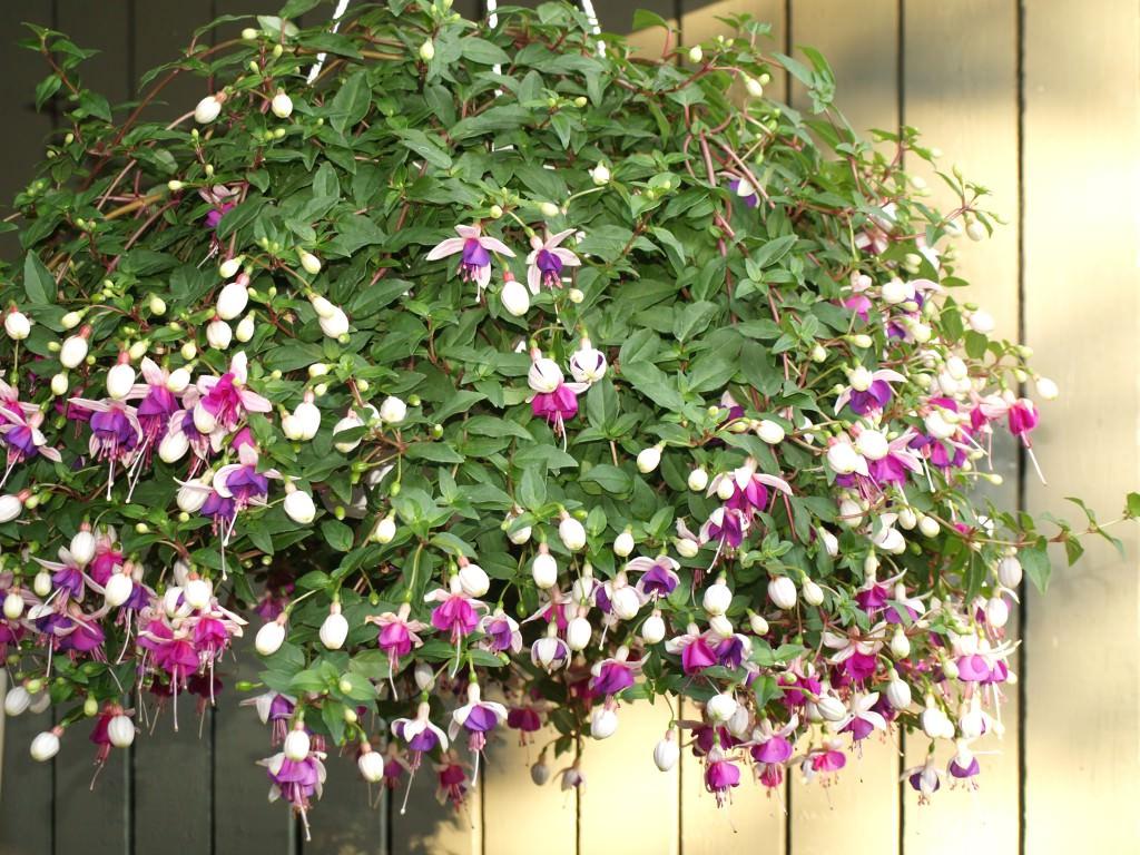 Цветоводов интересует. Сад, цветы и цветоводство
